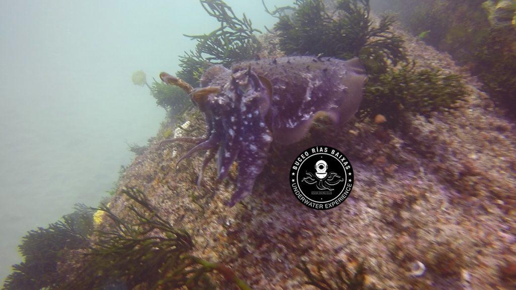 Camuflaje en el fondo del mar