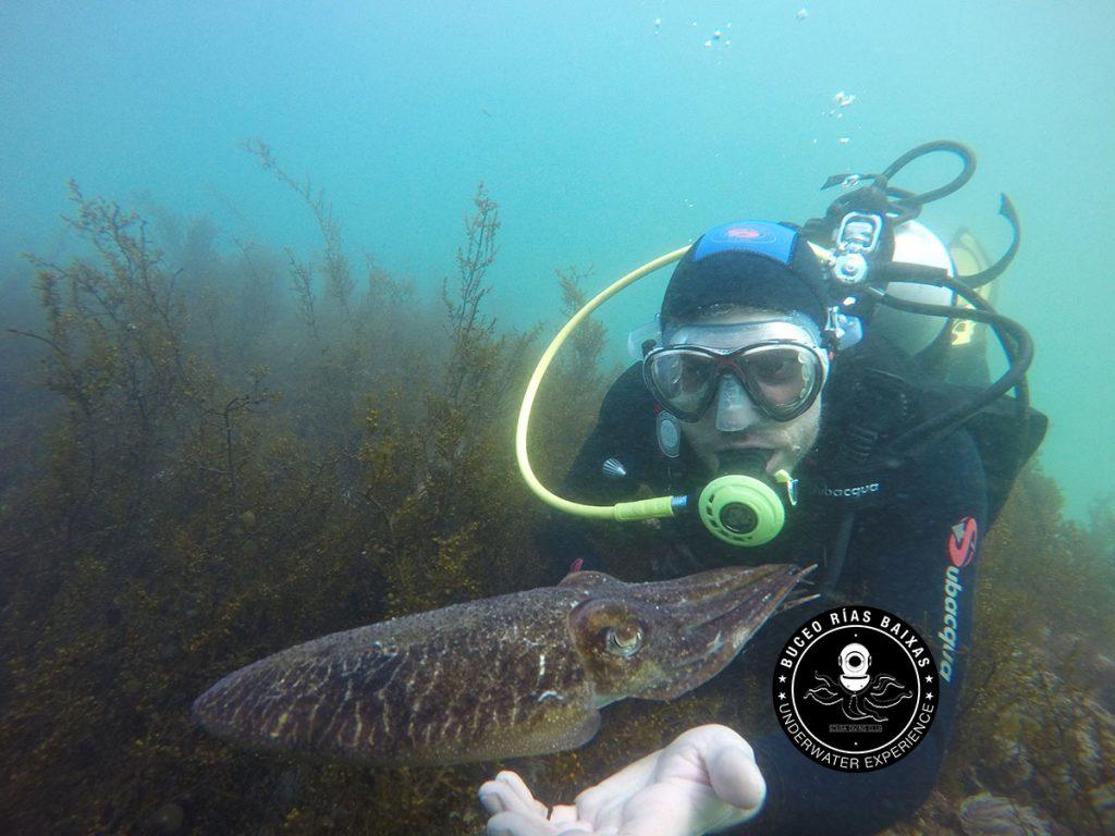 Buceo con vida submarina