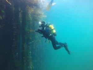 Buceo en bateas aldan