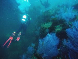 Bosque Gorgonias
