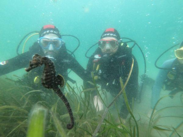 Safari con caballitos de mar