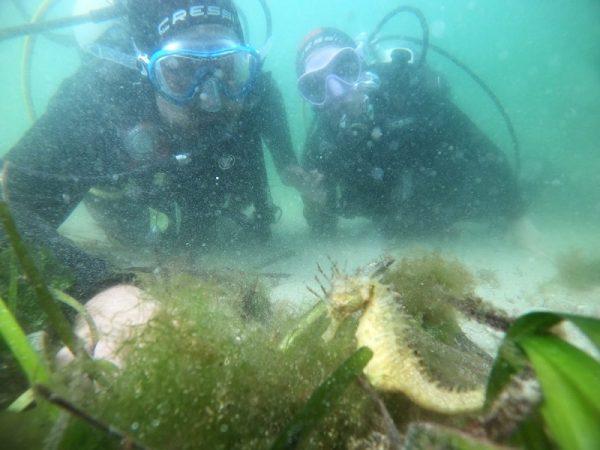 Safari de buceo con caballitos